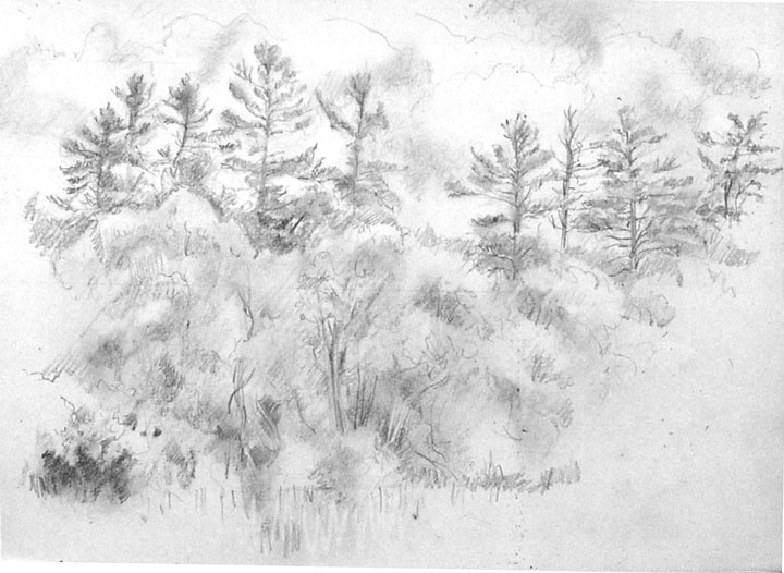 Ruth Tait drawing from Nature